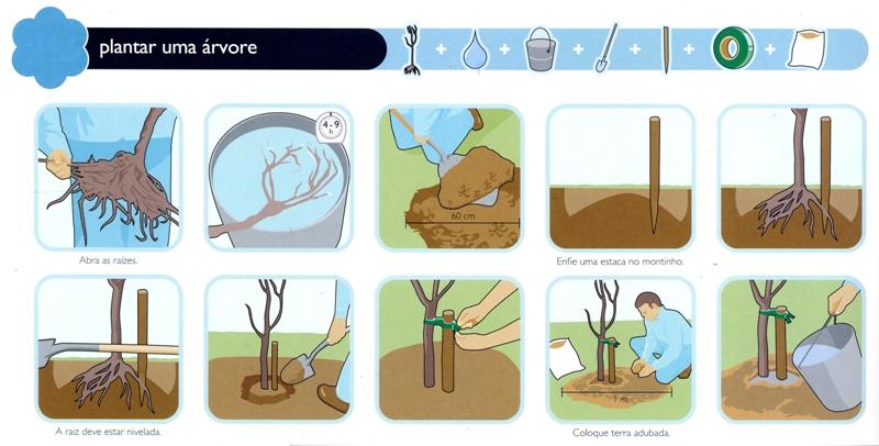 plante-uma-arvore-blog-usenatureza