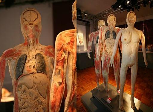 o-corpo-humano-modelos-blog-usenatureza