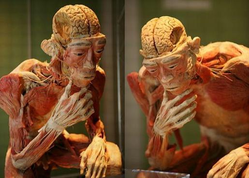 o-corpo-humano-pensando-blog-usenatureza