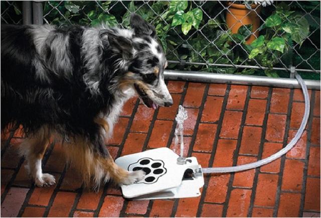 doggie-fountain