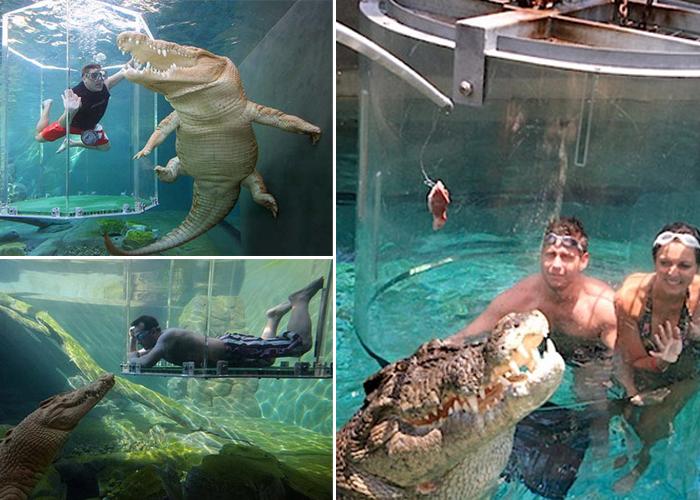 jaula-da-morte-cara-a-cara-com-crocodilos-gigantes-blog-usenatureza