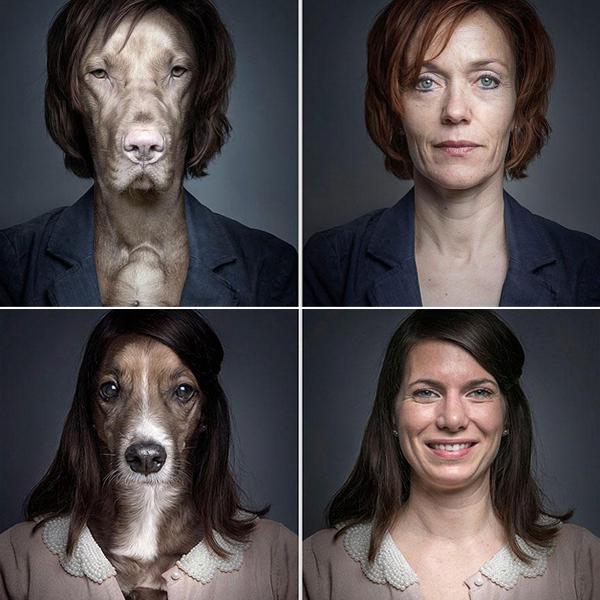 dono-dog