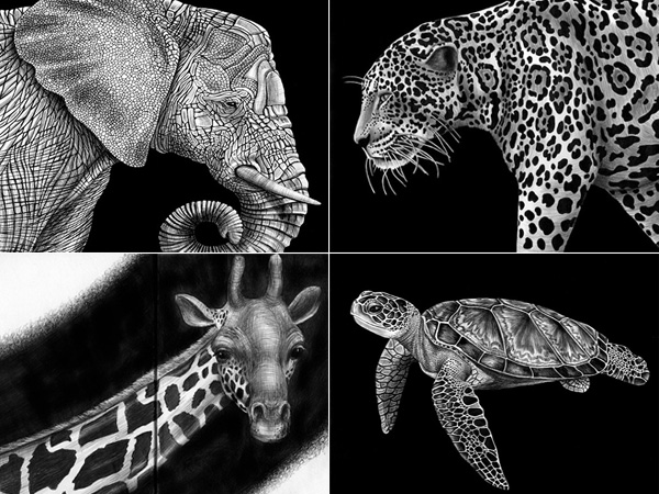 animais-desenhados-caneta