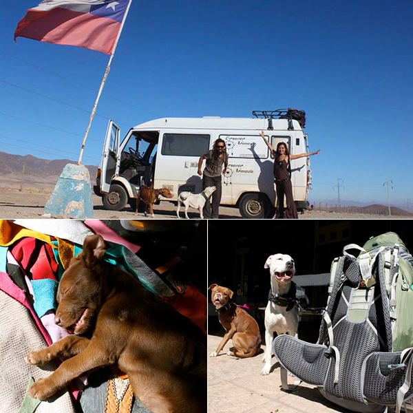 dog-viajar