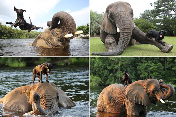 Elefante órfão e cachorra tornam-se amigos inseparáveis!