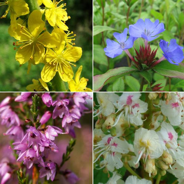 A sensibilidade dos Florais que curam a alma!
