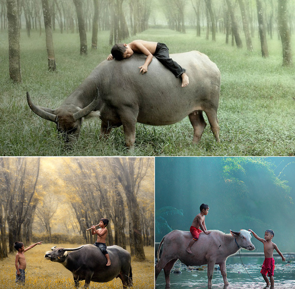 meninos-bufalo