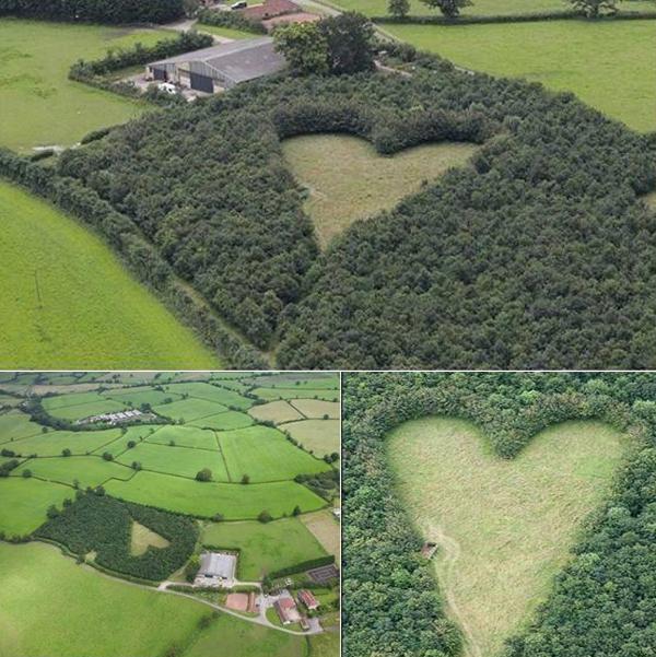 6 mil árvores ajudam agricultor a demonstrar todo seu amor!