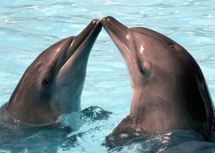 Golfinhos chamam uns aos outros pelo nome!