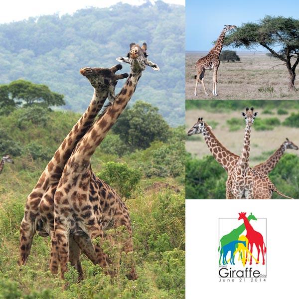 blog girafa