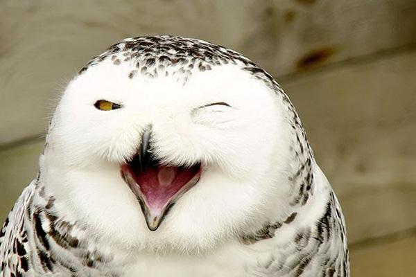 coruja-feliz