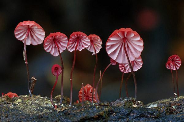 fungi01