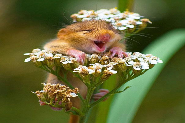 rato-feliz