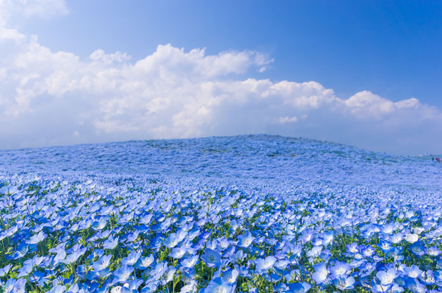 flores-japao1