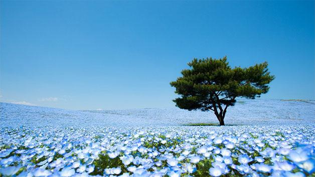 flores-japao3