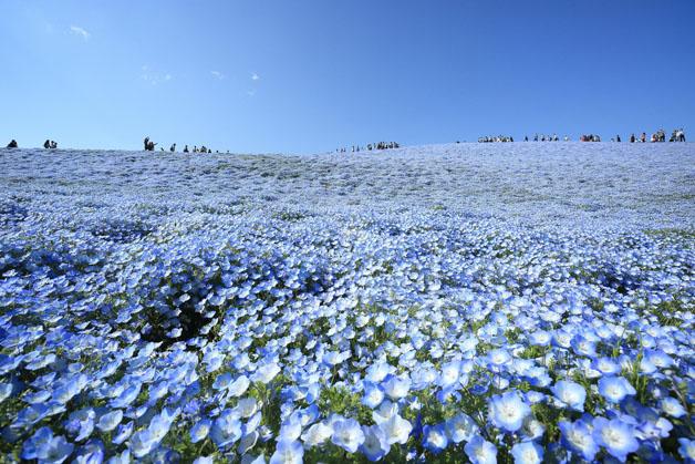 flores-japao6