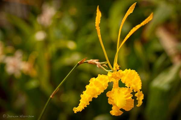 orquideas-e-suas-diferentes-especies-amarela-blog-usenatureza