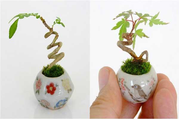 plantas-que-dao-o-verdadeiro-significado-a-palavra-miniatura-blog-usenatureza