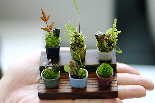plantas-que-dao-o-verdadeiro-significado-a-palavra-miniatura-bonsai-blog-usenatureza