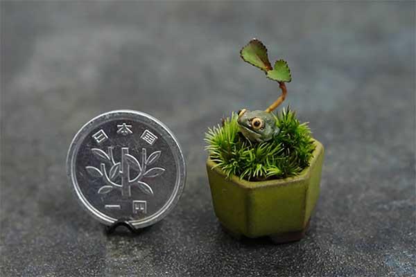 plantas-que-dao-o-verdadeiro-significado-a-palavra-miniatura-moeda-blog-usenatureza