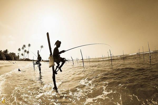 stilt-fishermen-sri-lanka-2[2]