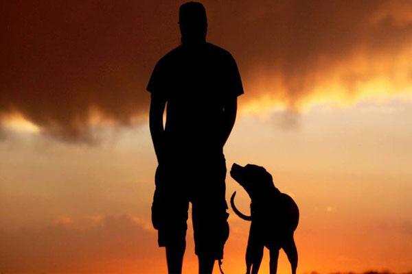 A inteligência que os cães podem nos ensinar