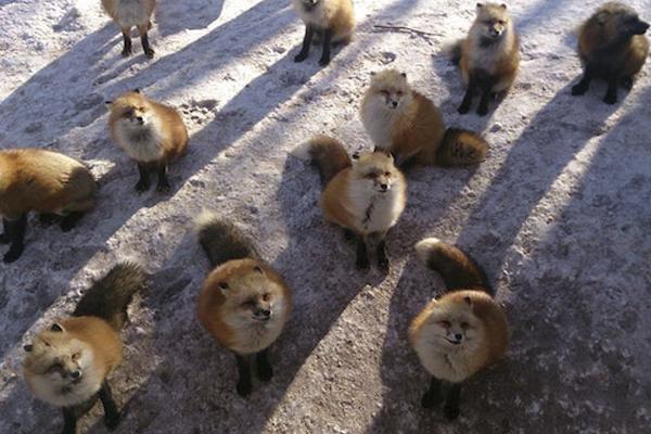 uma-ilha-de-raposas-blog-usenatureza