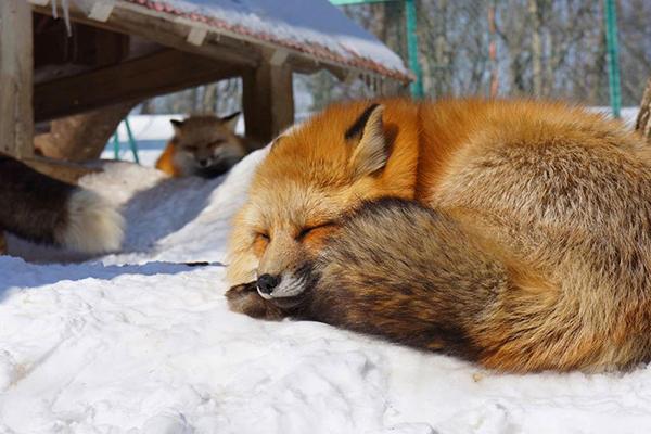 uma-ilha-raposas-blog-usenatureza