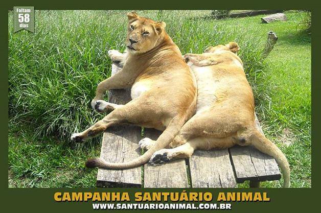 SANTUÁRIO BRASILEIRO ACOLHE ANIMAIS QUE SOFREM MAUS TRATOS
