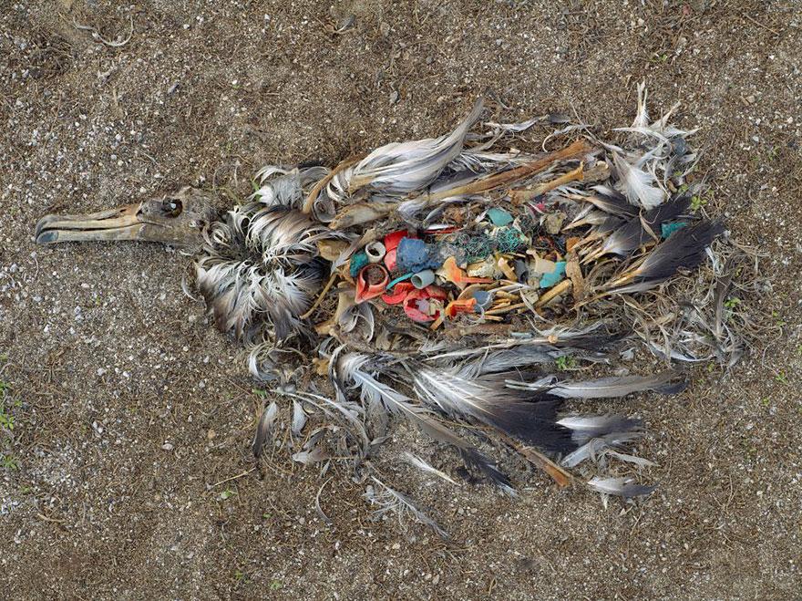 fotos-assustadoras-da-poluicao-mundial-passaro-blog-usenatureza