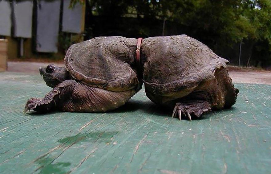 fotos-assustadoras-da-poluicao-mundial-tartaruga-blog-usenatureza