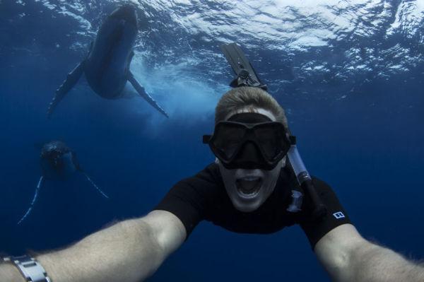 ja-sonhou-em-nadar-com-baleias-jubarte-blog-usenatureza