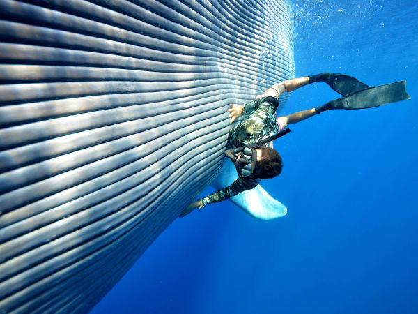 ja-sonhou-em-nadar-com-baleias-jubarte-craig-parry-blog-usenatureza