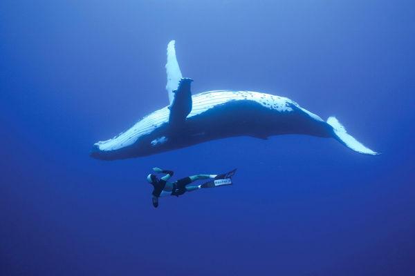 ja-sonhou-em-nadar-com-baleias-jubarte-oceania-blog-usenatureza