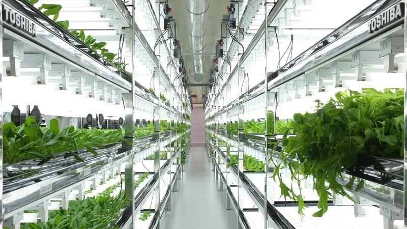 as-fazendas-tecnologicas-dentro-de-fabricas-antigas-toshiba-blog-usenatureza