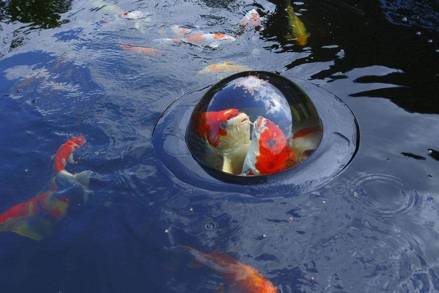 domo-flutuante-faz-peixe-enxergar-o-mundo-blog-usenatureza
