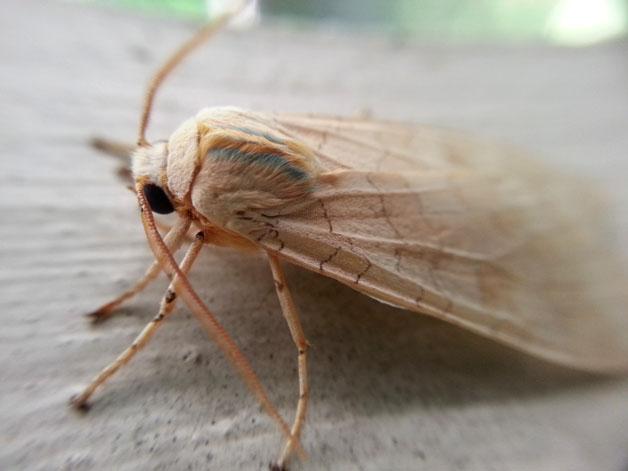 mariposas-contra-o-trafico-colombiano-blog-usenatureza