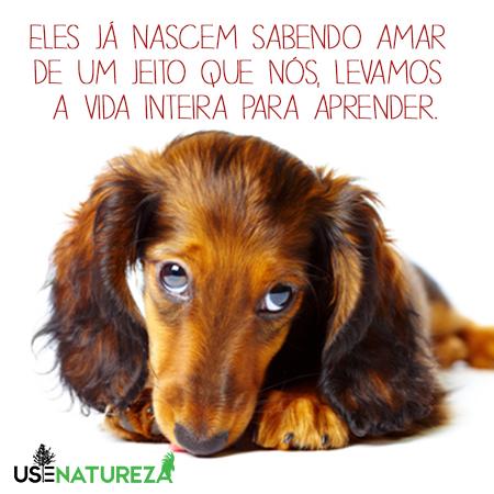 os-10-mandamentos-caninos-blog-usenatureza
