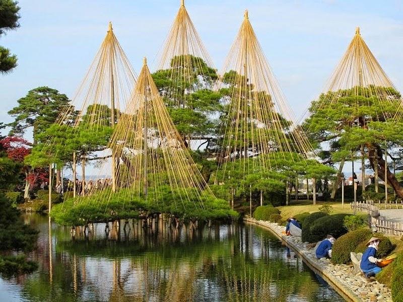 os-guarda-chuvas-que-protegem-os-pinheiros-japoneses-blog-usenatureza