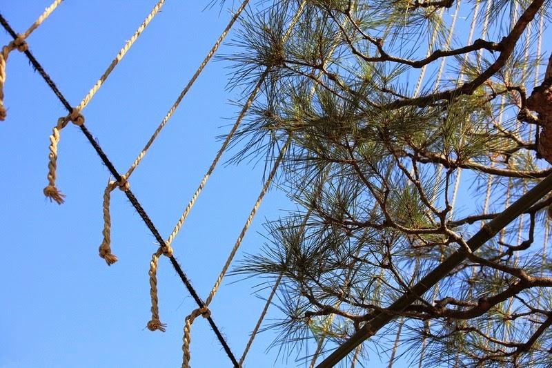 os-guarda-chuvas-que-protegem-os-pinheiros-japoneses-kenrokuen-blog-usenatureza