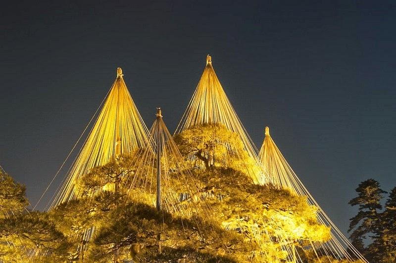 os-guarda-chuvas-que-protegem-os-pinheiros-japoneses-yukitsuri-blog-usenatureza