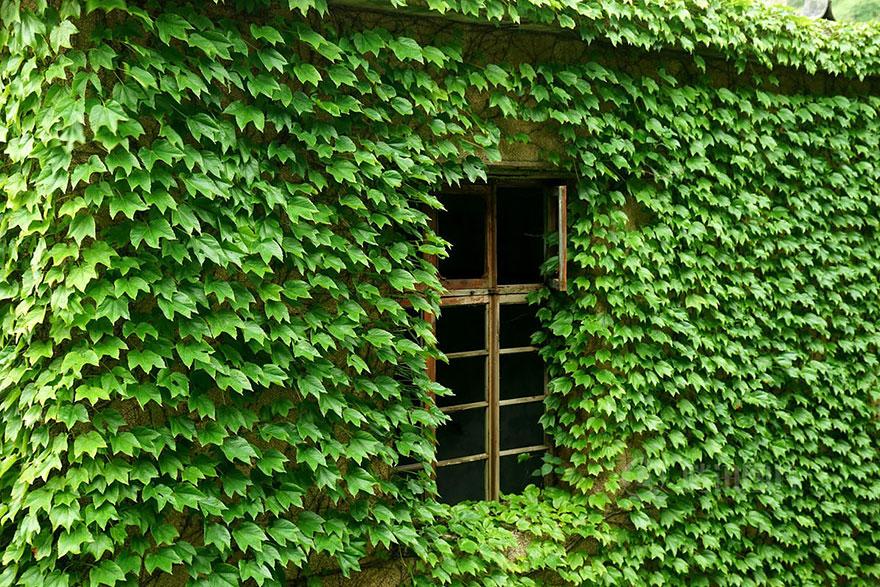 vila-chinesa-engolida-abandonada-natureza-blog-usenatureza