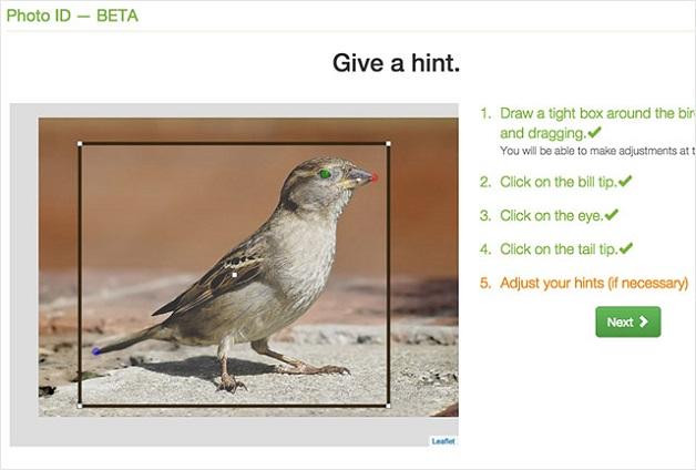 voce-fotografa-o-passarinho-e-o-site-merlin-te-diz-qual-a-especie--blog-usenatureza