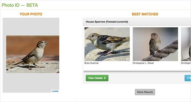 voce-fotografa-o-passarinho-e-o-site-merlin-te-diz-qual-a-especie-dele-blog-usenatureza