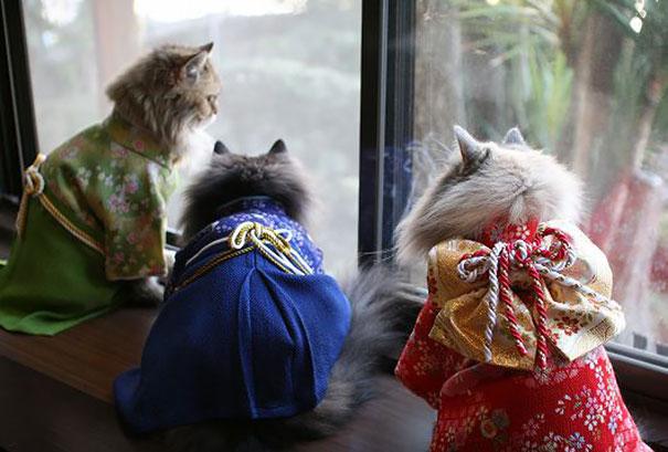 a-moda-de-gato-de-quimono-no-japão-blog-usenatureza