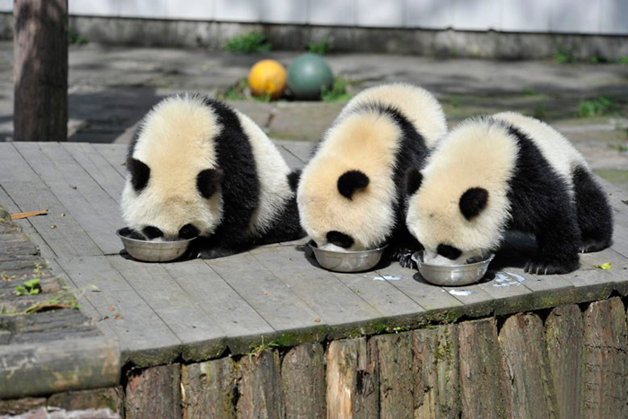 creche-dos-pandas-e-o-lugar-do-mundo-blog-usenatureza