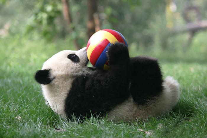 creche-dos-pandas-e-o-lugar-mais-adoravel-blog-usenatureza