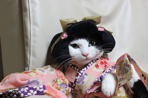 gato-quimoono-japão-blog-usenatureza