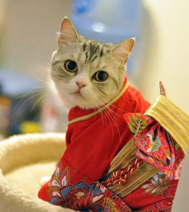 moda-quimono-gato-japão-blog-usenatureza