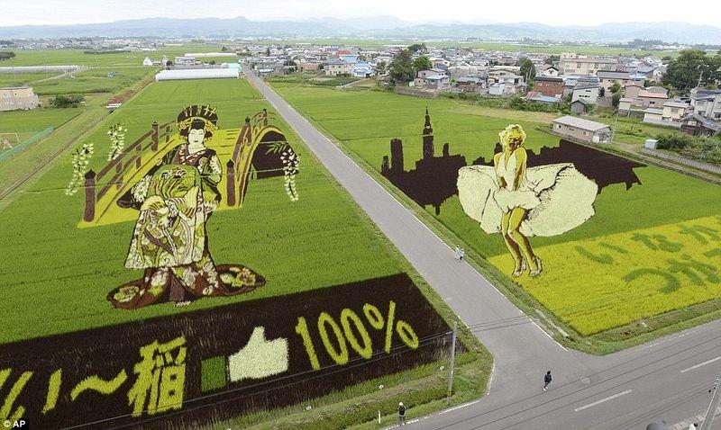plantacao-de-arroz-vira-obra-de-arte-japao-blog-usenatureza